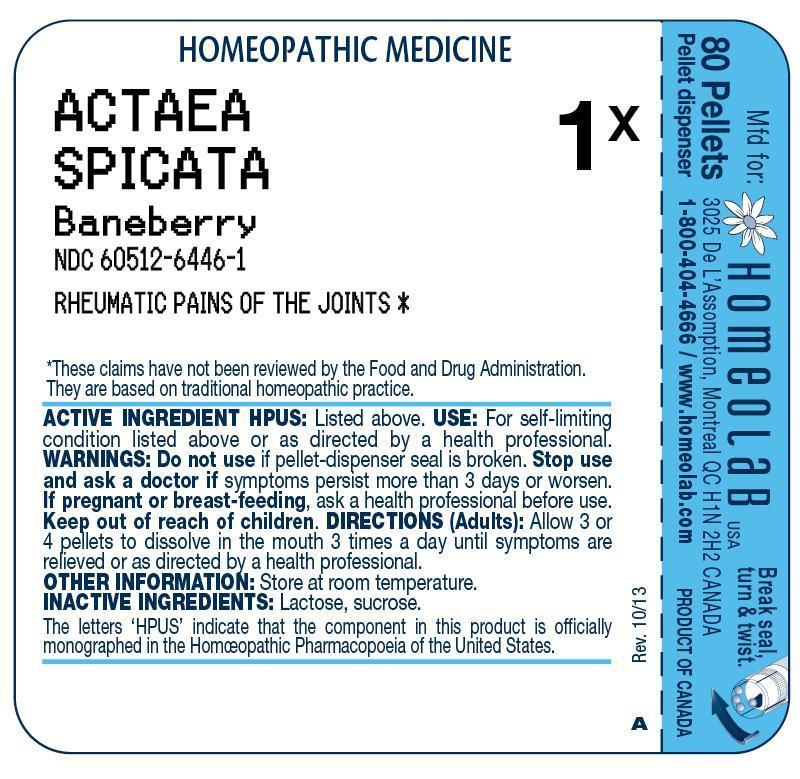 Actaea Spicata Pellet Breastfeeding