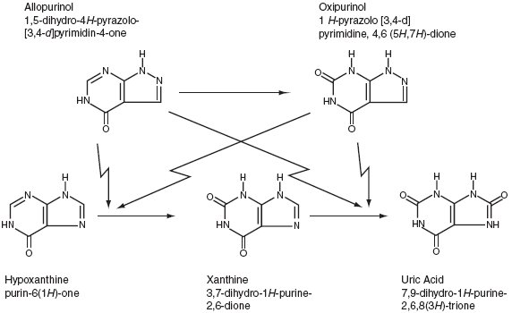 This an image demonstrating that allopurinol is a structural analogue of the natural purine base of hypoxanthine.