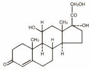 Cortef   Hydrocortisone Tablet and breastfeeding