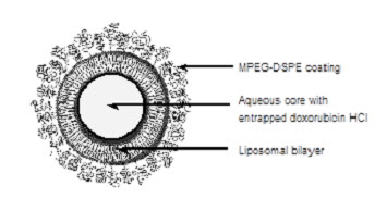 Representation of a STEALTH liposome
