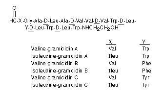 Gramicidin (structural formula)